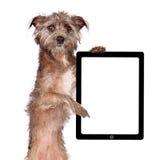 Собака терьера стоя держащ таблетку стоковое фото rf