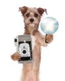 Собака терьера с винтажной камерой и вспышкой Стоковые Фотографии RF