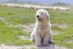 собака тинная Стоковые Фото