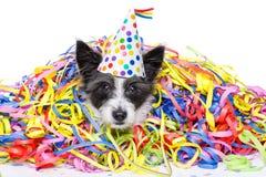Собака торжества партии Стоковая Фотография