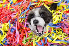 Собака торжества партии Стоковое Изображение