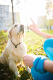 Собака тренировки девушки в воротнике Стоковое Изображение