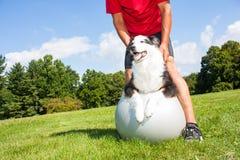 Собака тренировки на шарике йоги Стоковая Фотография