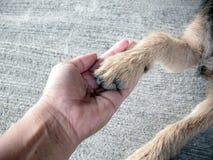 Собака тряся руку и лапку Стоковые Изображения