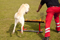 Собака укрытия Стоковое фото RF
