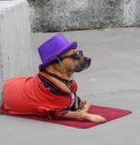 Собака улицы стоковая фотография rf