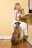 Собака умоляя для бекона Стоковые Изображения RF