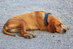 собака унылая Стоковые Изображения RF