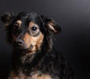 собака унылая Стоковое фото RF