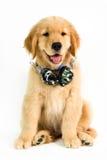 Собака усаженная с наушниками на белой предпосылке стоковые изображения
