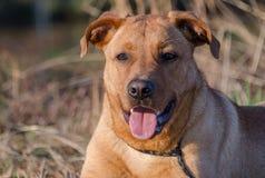 Собака утки Retriever стоковая фотография