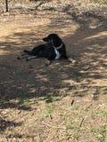 собака утомляла стоковое изображение