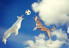 Собака улавливая шарик в midair Стоковое фото RF