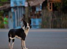 Собака улицы альфы Стоковая Фотография