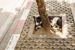 Собака улицы Таиланда Стоковые Изображения