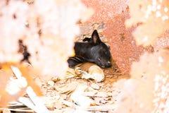 Собака улицы, Таиланд Стоковая Фотография