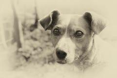 Собака улицы Стоковая Фотография