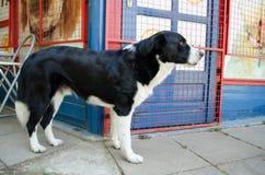 Собака улицы Стоковое Изображение
