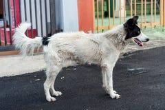 Собака улицы Стоковое фото RF