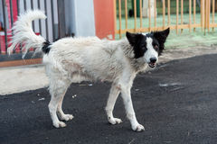 Собака улицы Стоковые Изображения