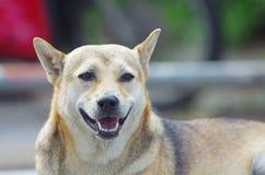 собака улыбки Стоковая Фотография