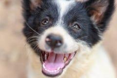 собака улыбки Стоковое Изображение RF