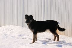 Собака; фамилия стоковое изображение