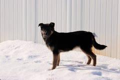 Собака; фамилия стоковые изображения rf
