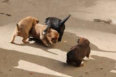 Собака; фамилия стоковое фото rf