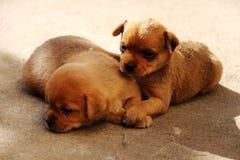 Собака; фамилия стоковое фото