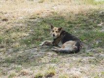 Собака фермы Стоковая Фотография RF