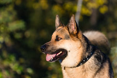 Собака фермы стоковые фотографии rf