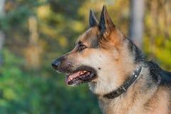 Собака фермы стоковое фото