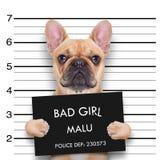 Собака фотографии стоковое изображение rf