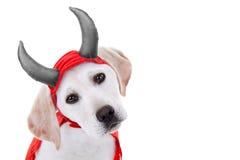 Собака хеллоуина Стоковая Фотография