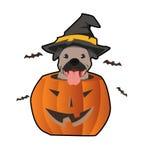 Собака хеллоуина Стоковые Изображения RF