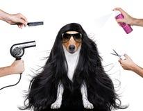 Собака холить на парикмахерах Стоковые Изображения