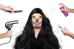 Собака холить на парикмахерах Стоковое Фото