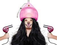 Собака холить на парикмахерах Стоковое фото RF