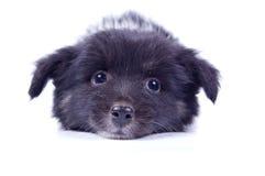 собака хорошая очень Стоковое фото RF