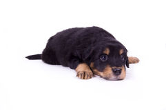 собака хорошая очень Стоковая Фотография RF