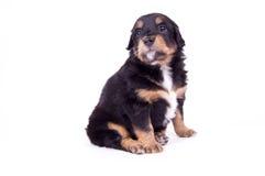 собака хорошая очень Стоковое Изображение