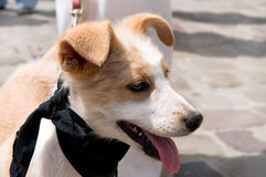 собака хорошая Стоковое Фото
