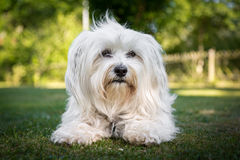 собака хорошая Стоковая Фотография