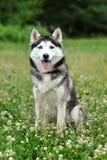 собака хорошая Стоковые Изображения