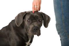 собака хорошая Стоковое Изображение