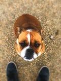 собака хорошая Стоковые Изображения RF