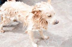 собака чистки Стоковое Фото