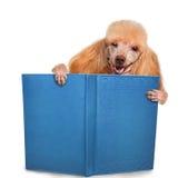 Собака читая книгу Стоковое Фото