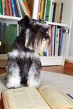 Собака читая книгу Стоковые Изображения RF